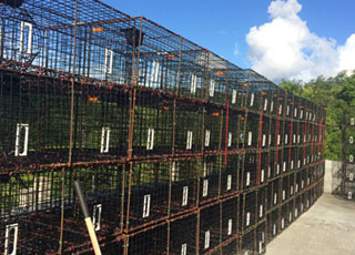 St. Thomas fishermen installed escape vents in fish traps