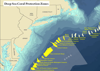 The 15 discrete protected zones (in yellow) and large broad protected zone, as agreed upon by the MAFMC. The total area of these proposed zones spans 38,000 square miles, roughly the size of Virginia. Credit: The Nature Conservancy.