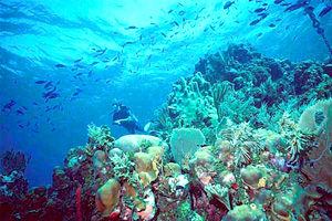 An underwater shot of a coral reef