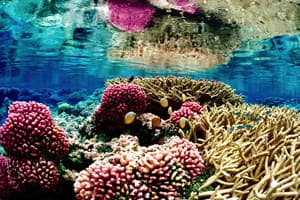 healthy colorful coral reefs