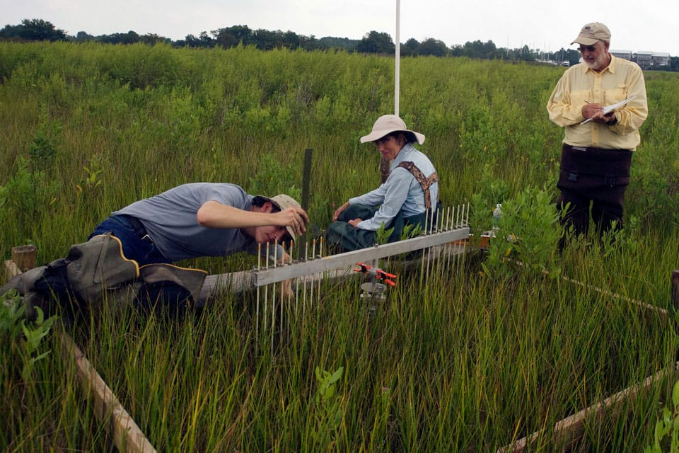 Scientists are testing how fast soil is building up in this marsh using a device called a Surface Elevation Table on Maryland's Eastern Shore.