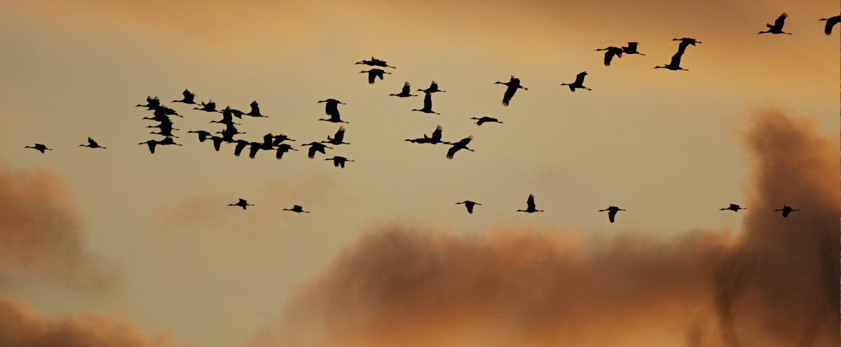 a flock of birds in the sky against a sunset