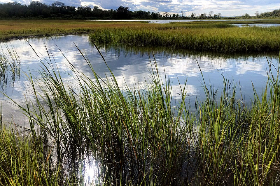 Researchers found that this marsh is 'unhappy' even though it appears to be vibrant and healthy. Persistent marshes all share common traits.