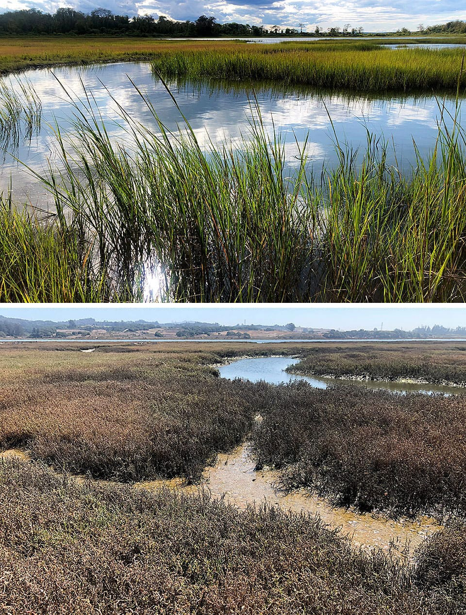two marshes; while both marshes are not healthy, one looks so and the other looks very green and healthy.