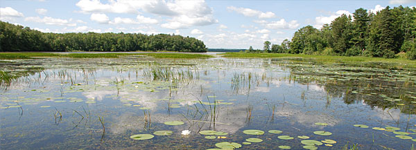 The Pokegama Bay section of the new Lake Superior National Estuarine Research Reserve contains one of the largest municipal forests in the United States. Its 6,723 acres contain extensive forested wetlands, uplands, clay flats and submerged lands in the city of Superior, Wisc.