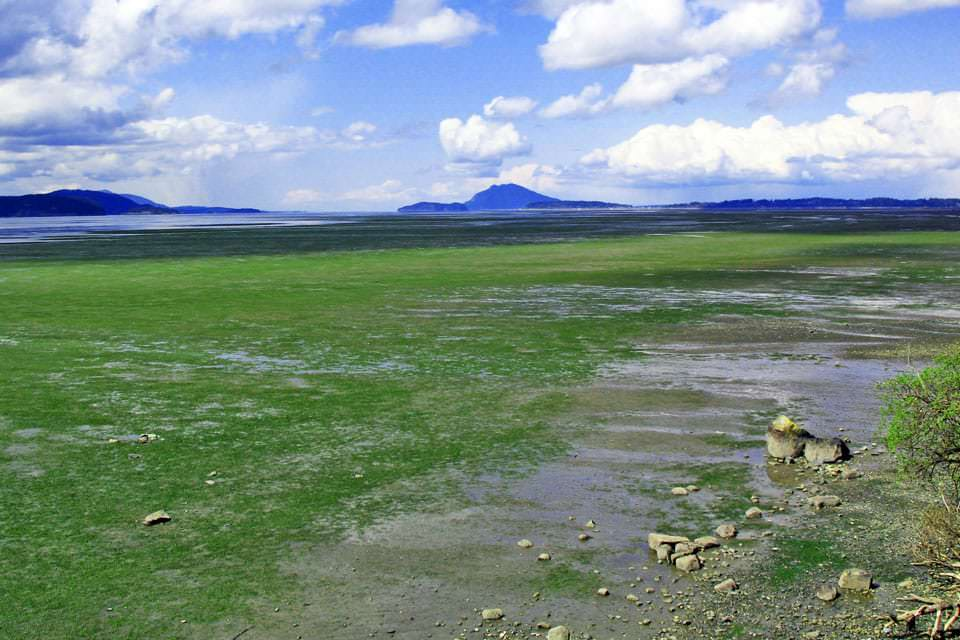 Padilla Bay National Estuarine Research Reserve eelgrass meadow