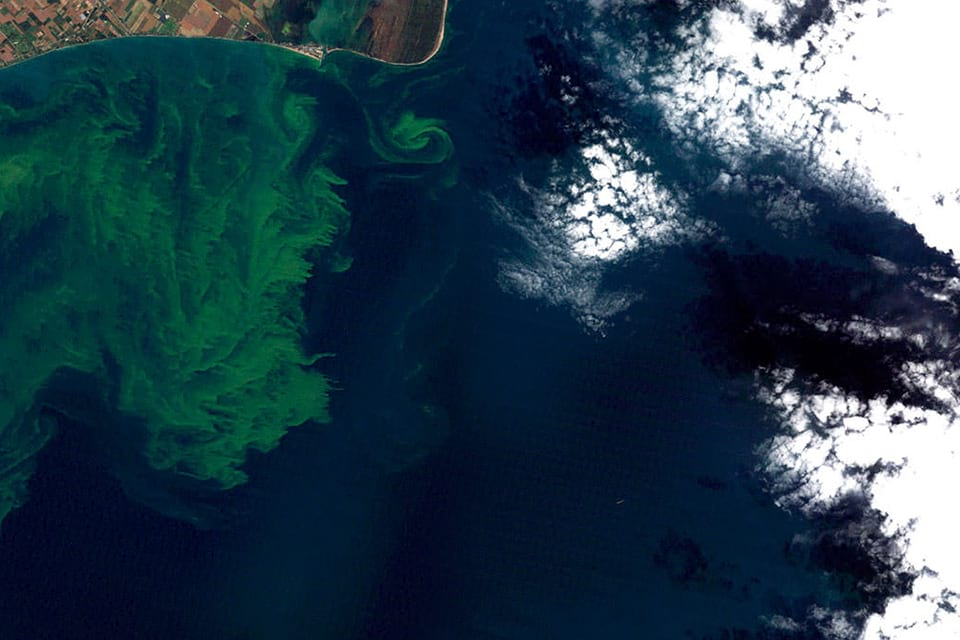an aerial image of a harmful algal bloom event