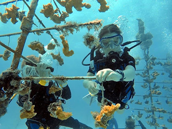 Colorado Coralition student cleaning coral nursery.