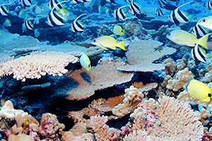 A coral reef featuring corals and fish