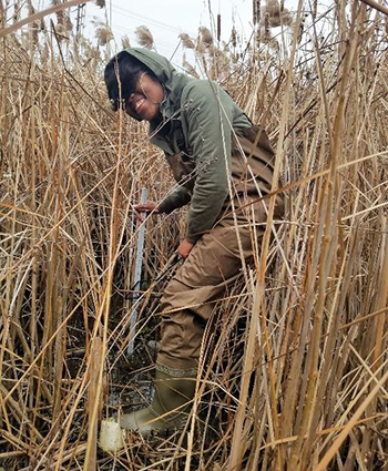 Environmental science student takes measurements before invasive species removal.