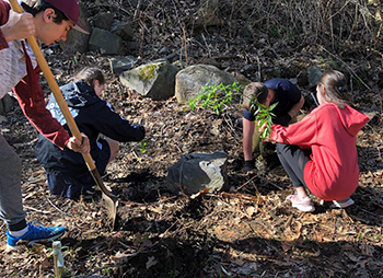 Middle school students planting native species after removing invasive plants.
