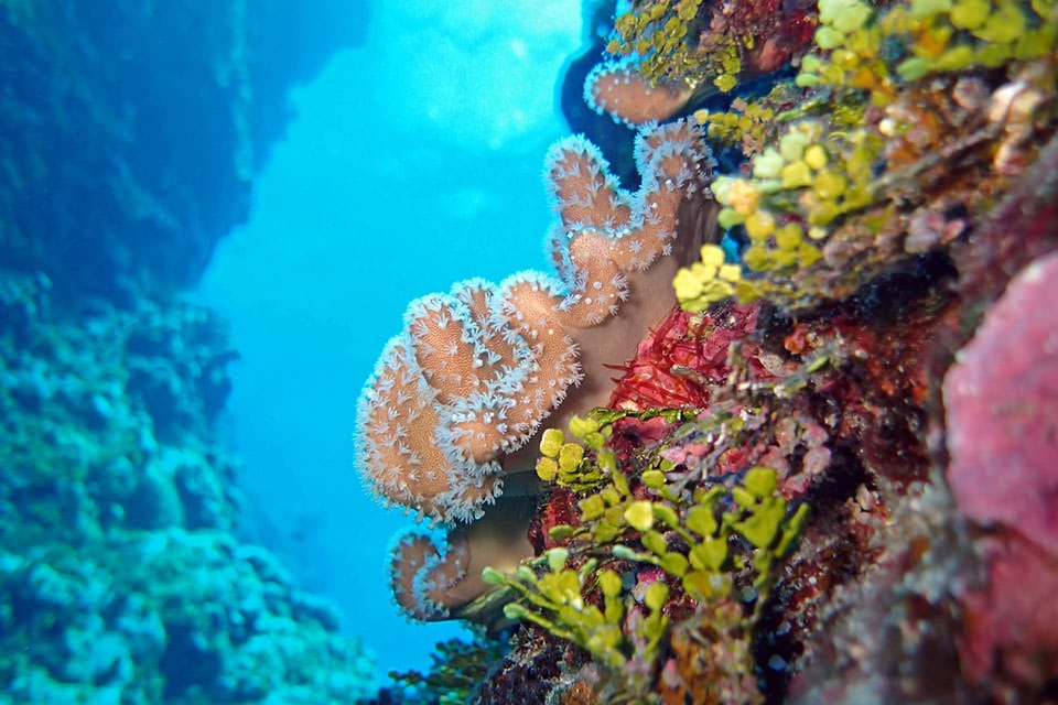 Pacific colorful corals