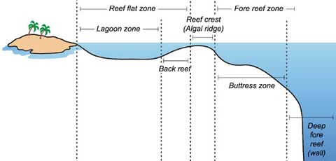 Cross section of coral reef