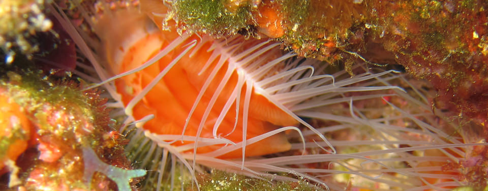 What is a bivalve mollusk?
