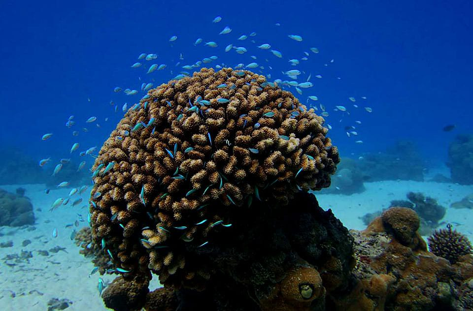 Are corals animals or plants?