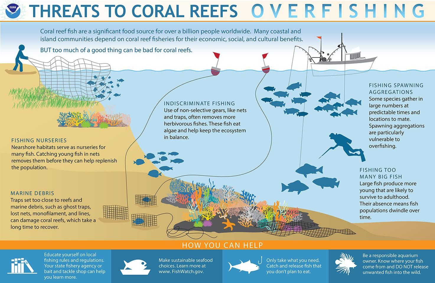 Overfishing can deplete key reef species and damage coral habitat