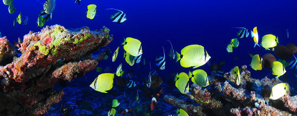 What Species Live In And Around Coral Reefs