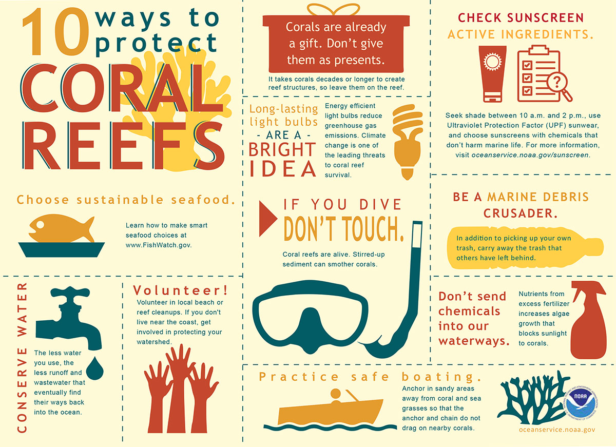 Things you can do to protect coral reefs infographic.