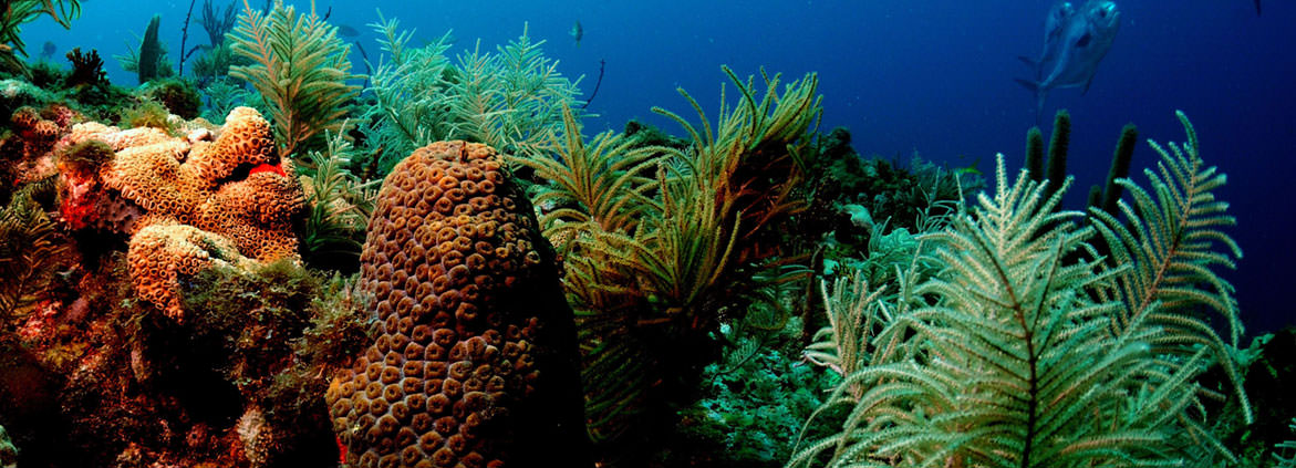 a coral reef