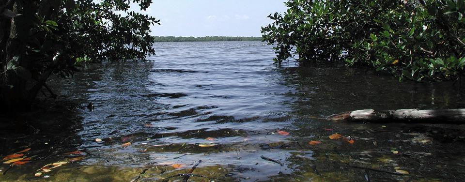 Is Change Important To Estuaries