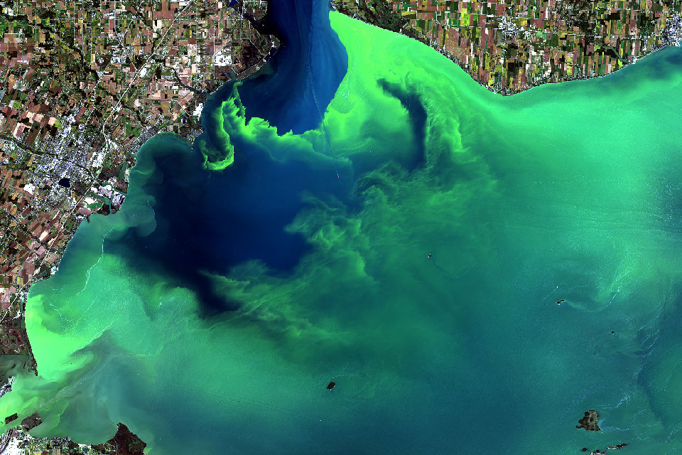 Imagery of the Western Lake Erie harmful algal bloom from September 26, 2017. The scum shown here near downtown Toledo stretched all the way to Lake Ontario. This photo is from Landsat-8 (a NASA/USGS satellite).