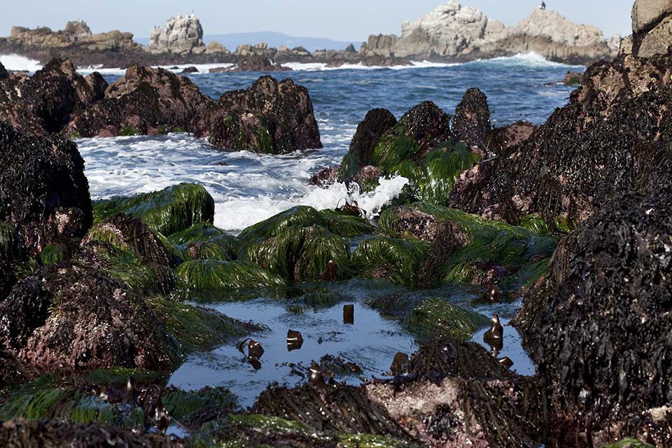A tide pool within Monterey Bay National Marine Sanctuary