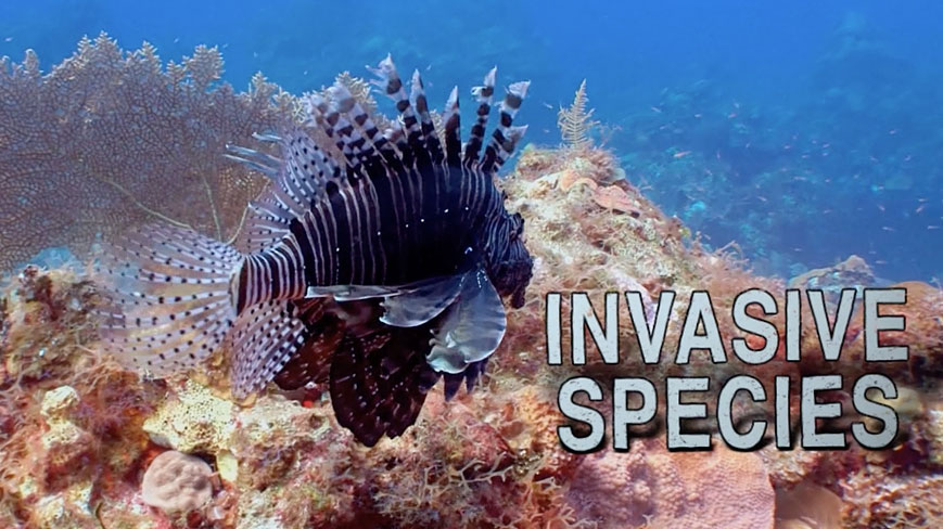 What Is An Invasive Species
