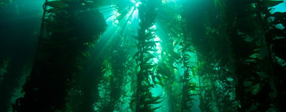Ocean Floor Food Chain