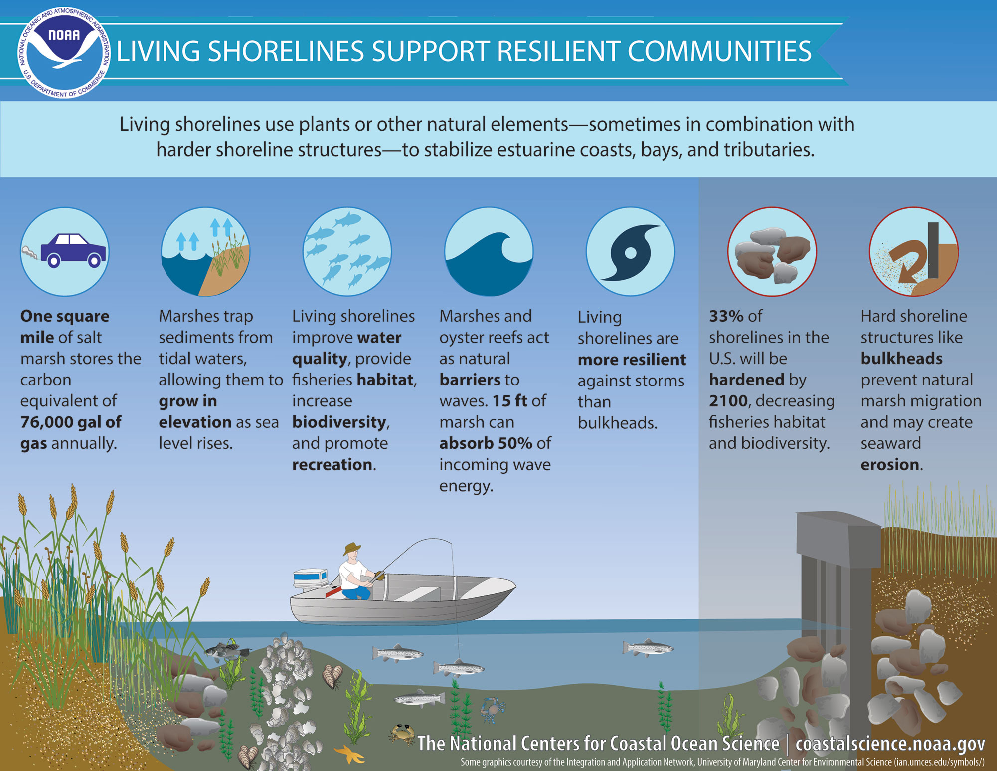 What Is A Living Shoreline