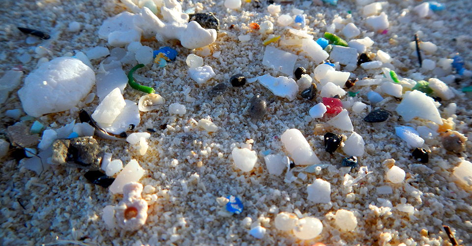 Microplastics seen during the 2014 Northwestern Hawaiian Islands marine debris removal mission