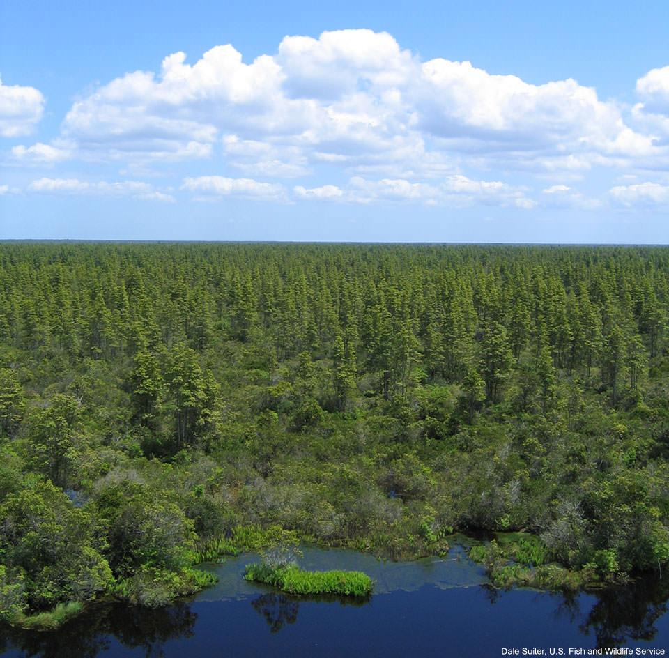 Pocosin Lakes National Wildlife Refuge, North Carolina.