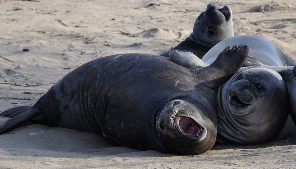 ​seals on the beach