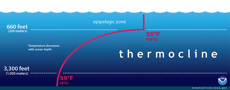 What is a thermocline for Deep ocean floor definition