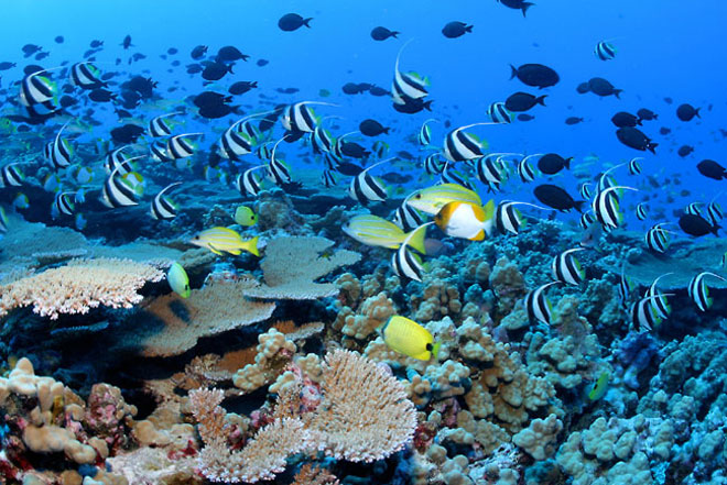 What Are The Three Main Types Of Coral Reefs
