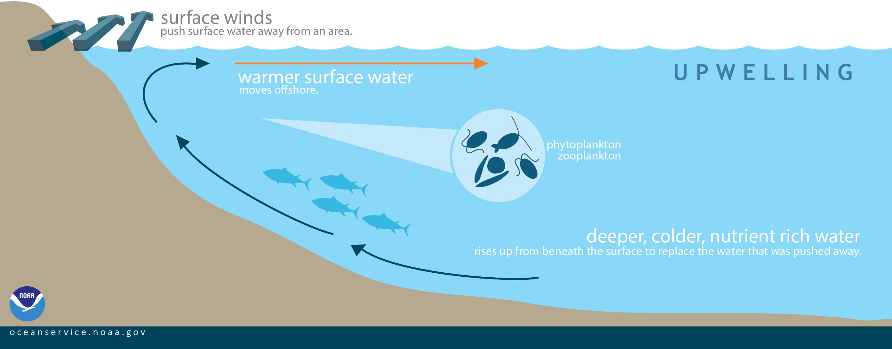 illustration of upwelling