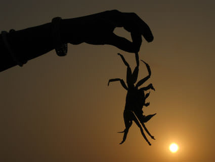 Sunset Crab