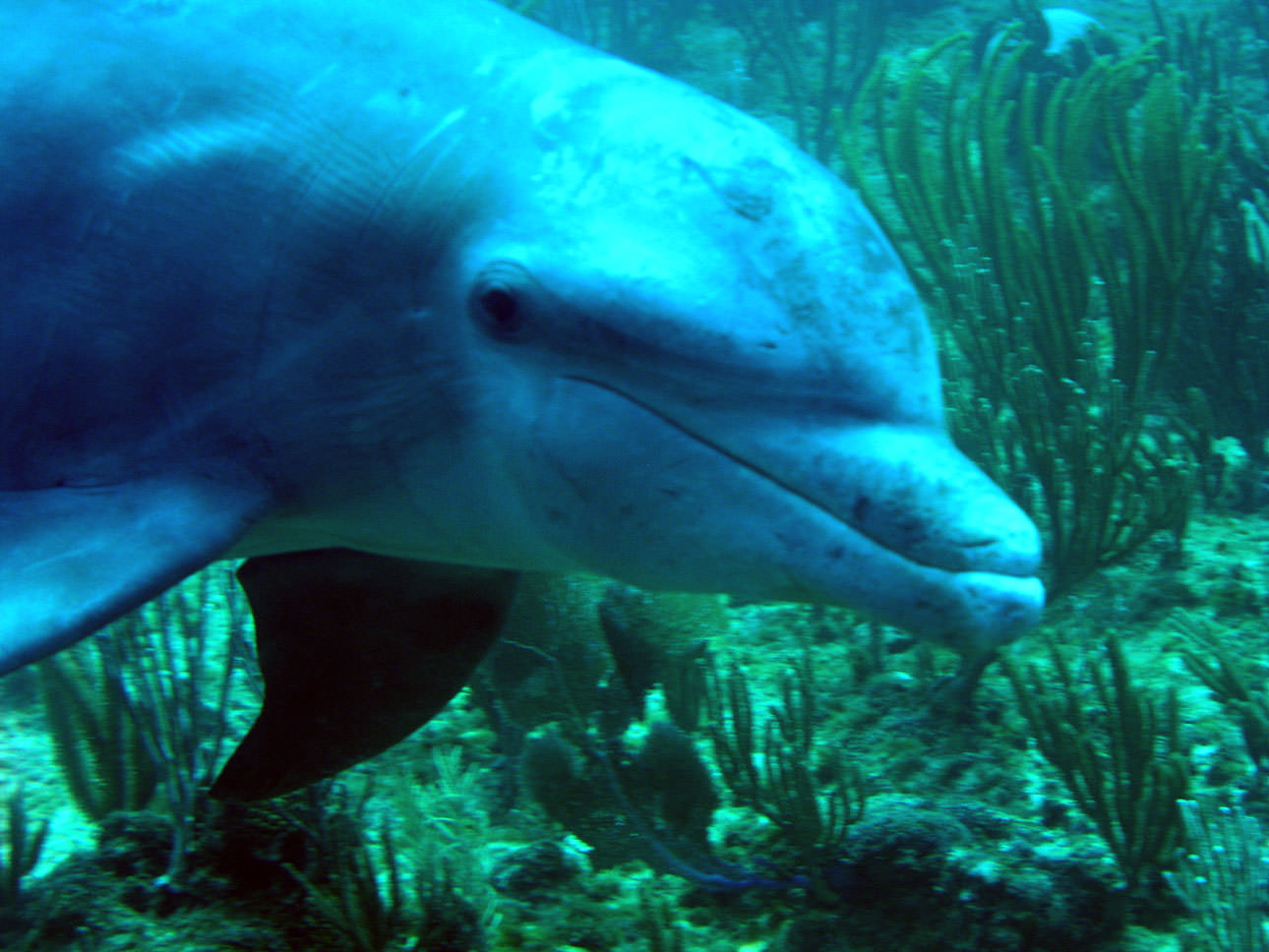 NOAA's National Ocean Service Ocean Images: Dolphins are ...