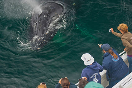 volunteers counting whales