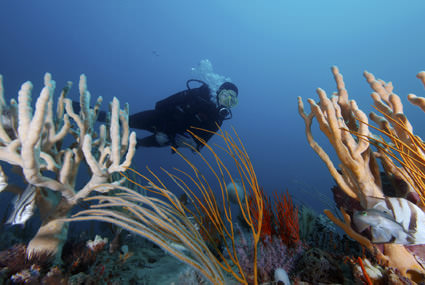 Diver, sponges, gorgonians and fishes