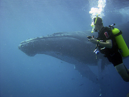Humpback Whale Encounter