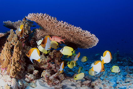 French Frigate Shoals Reefscape