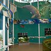 inside Rookery Bay NERR learning center