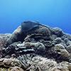 Northwestern Hawaiian Islands marine debris removal mission