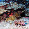 lobster on reef