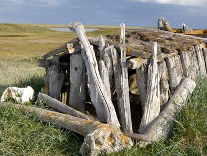 driftwood. Image credit: Robert Schwemmer, NOAA National Marine Sanctuaries