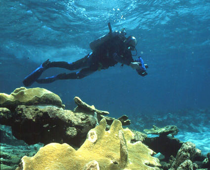 Restoring a Reef