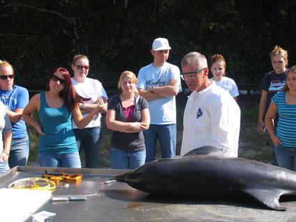Dolphin Necropsy