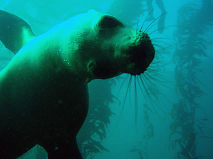 Sea Lion Pose. Image credit: Claire Fackler, NOAA National Marine Sanctuaries