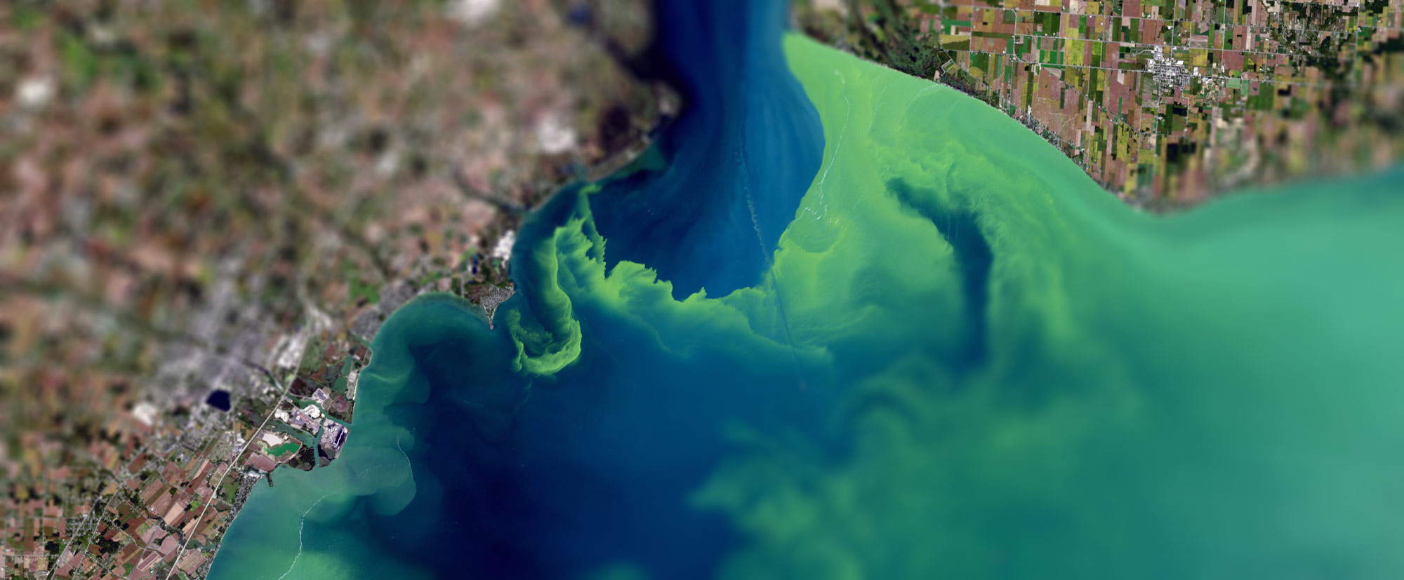 an image of 2017 harmful algal bloom in Lake Erie