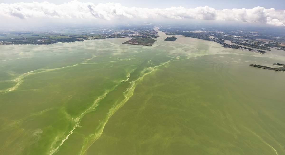 an image of the Lake Erie with a green algal bloom